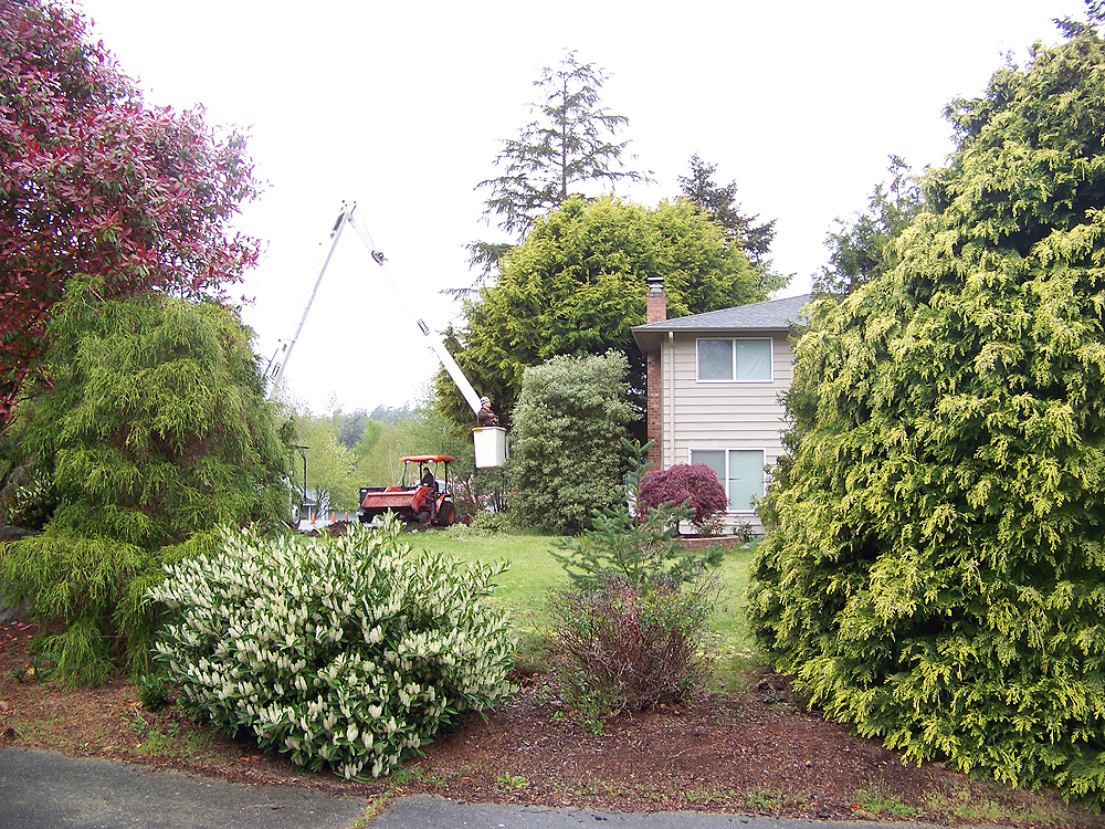 Pioneer Tree Service & Landscaping