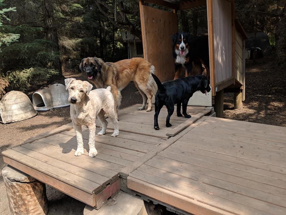 Adventure Trails Dog Camp