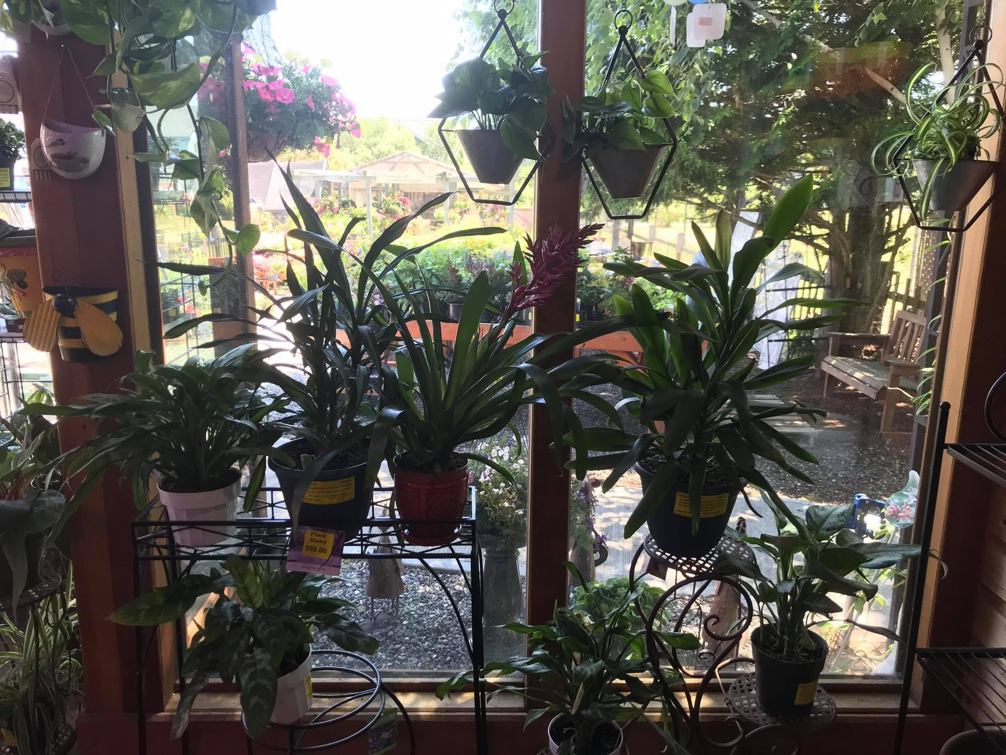 Rain Shadow Nursery