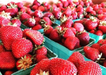 4th Annual Strawberry Daze Festival