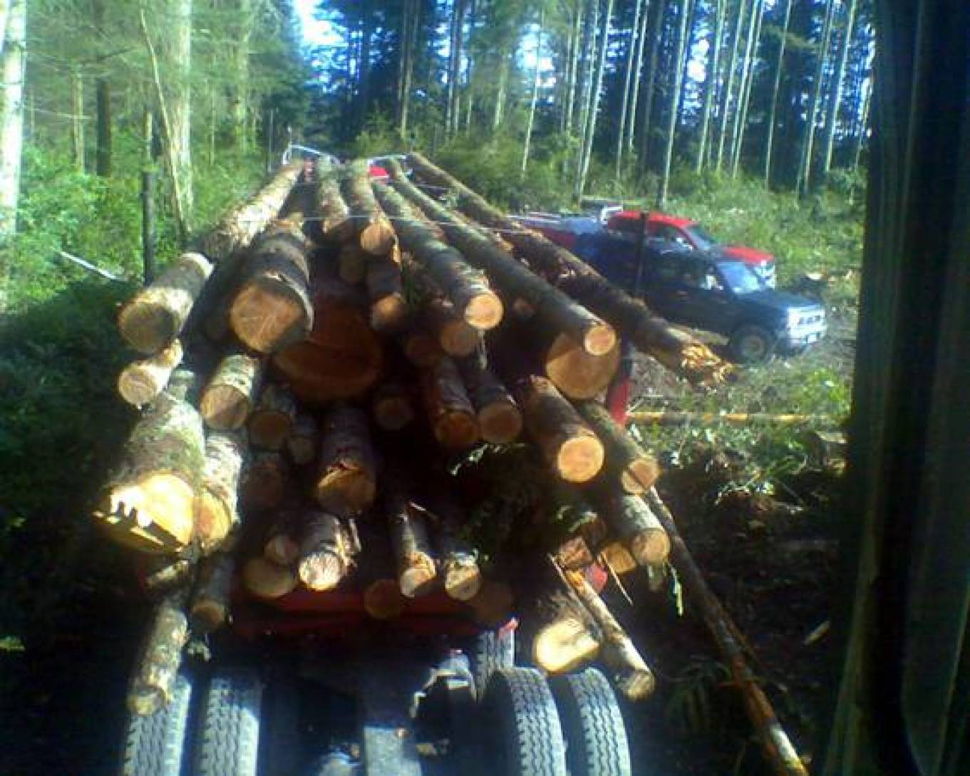$FIREWOOD For Sale / LOG TRUCK LOADS (whidbey island)