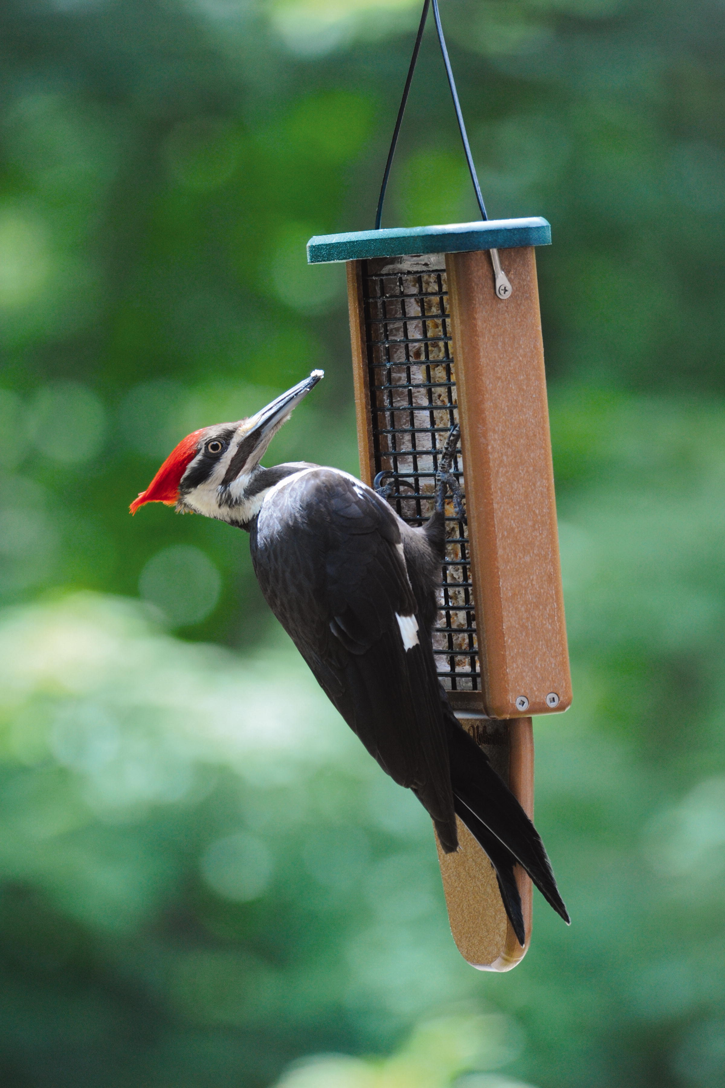 here are tips for taking care of your winter backyard birds from